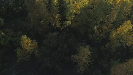 enviroment : Aerial drone footage. Flight over autumn forest on island close-up shot