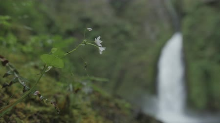 účinky : a slowmotion shot of a flower blowing in the wind with a blurry waterfall in the background