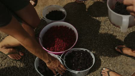 a group picks up their berry buckets from the harvest.