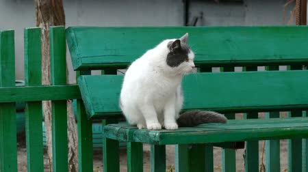 kočička : white cat scratched a flea bite is sitting on the bench