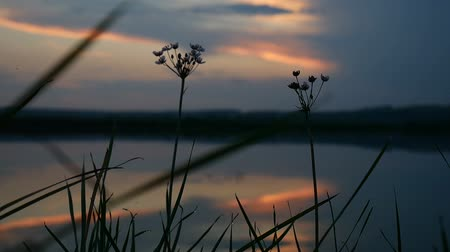 greenwich : sunset grass silhouette lake water in the background mountains video nature landscape