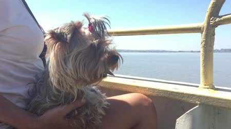 dog pet sits on the hands of a woman swims on a ship on the deck on the water slow motion video Vídeos
