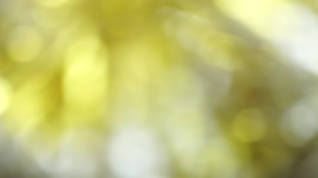 Yellow color abstract background with blurred defocus bokeh light for template