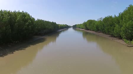 mangue : Beautiful mangrove of Thailand,sky vision