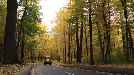 навес : Asphalt road in the autumn forest, with yellow and green trees