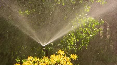 irrigation system : Clever garden with a fully automatic irrigation system, water azaleas.