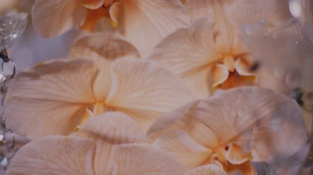 phalaenopsis : Super close up parralax shot of roses and peach orchids on crystal candelabra centerpieces.