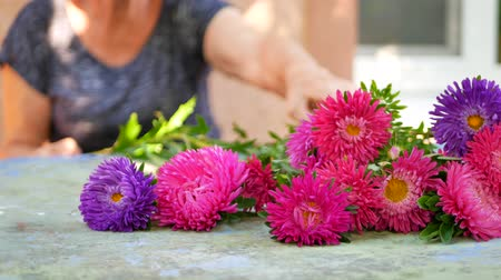 michaelmas daisy : Woman florists hands making bouquet with pink, purple or violet michaelmas daisy or aster flower on table for flower shop outdoor