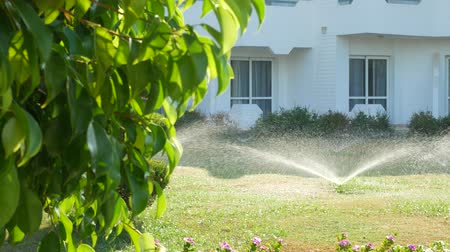 орошение : Sprinkle sprays water on green grass in garden on white house background at sunny day Стоковые видеозаписи