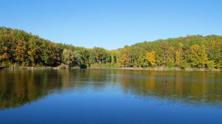 Autumn colorful foliage with lake reflection Stok Video