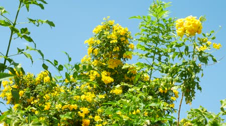 Yellow flowers on green trees and sunlight background Stok Video