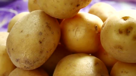 pano de saco : Fresh Young Yellow organic potatoes on table background