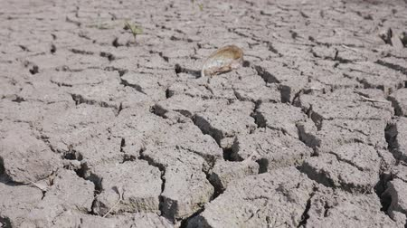 засуха : Dry river affected environment of life, ecosystems caused by climate change. Concept of drought, ecology catastrophe or death without moisture