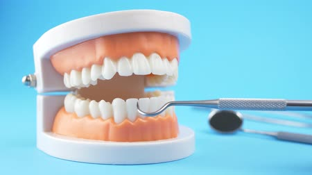 sharp teeth : Doctor examining teaching model of gums and teeth for dentist by dental hook with cleaning tools on back blue background Stock Footage