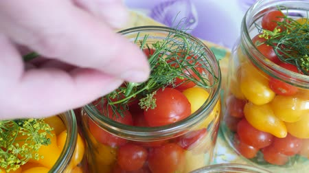 fennel : Housewife puts dill in a glass jar with tomatoes. Homemade pickled canned red and uellow tomato with herbs. Home preservation Stock Footage