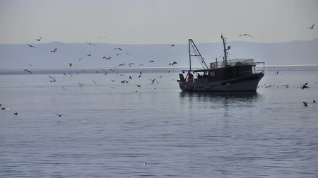 fishing industry : Fishing boat with many seagulls on blue sea