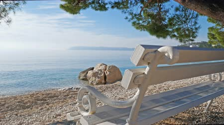 adriyatik : Empty wooden bench with scenic sea view on beach under pine tree on sunny day Stok Video