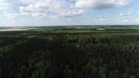 backround : Flight over the Forrest Stock Footage