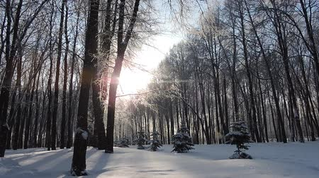 Snowfall in winter in the forest, soft snowy christmas morning with falling snow Stock mozgókép