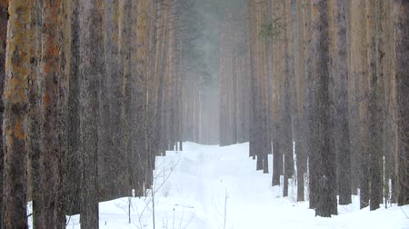 Snowfall in winter in the forest, soft snowy christmas morning with falling snow Vídeos