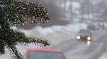 icy : Snowfall. Fir branches covered with snow and drops. The car goes on the road
