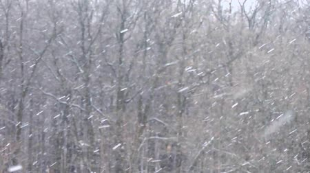 Snowfall in winter in the forest, soft snowy christmas morning with falling snow 動画素材