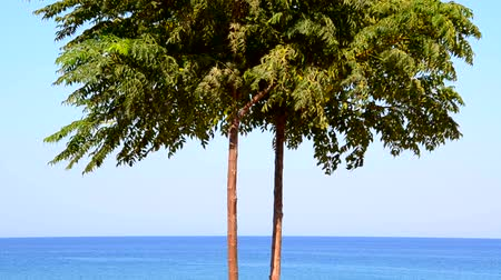 лазурный : Beautiful seascape, lonely tree on the background of azure sea and blue sky Стоковые видеозаписи