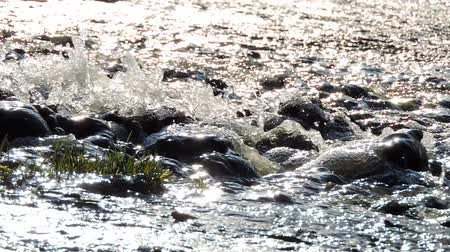 rivulet : Mountain waterfall, creek, river. Water splashes over stones in sunlight