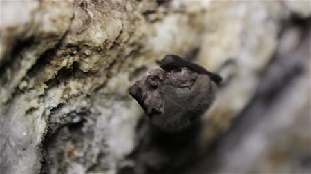 career path : Bat in cavern Stock Footage