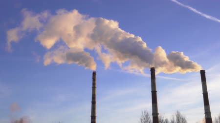 termal : smoke from the chimneys of a thermal power plant at sunset Stok Video