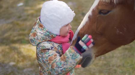 bochecha : A little girl is stroking the horse and pressing her cheek to her. Slow motion Stock Footage