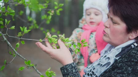 dark green : A middle-aged woman and a little girl are looking at a flowering tree Stock Footage