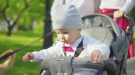 evez : A one-year-old child drives in a stroller with parents in the park. Slow motion