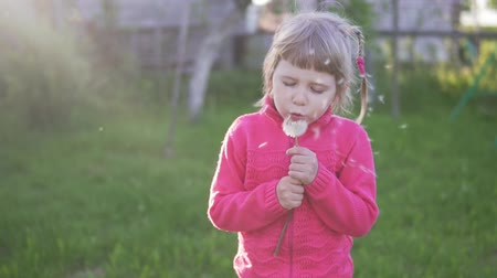 kaviár : Little girl blowing on a dandelion Stock mozgókép
