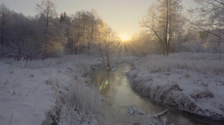szron : dawn in the winter forest, hoarfrost on the grass