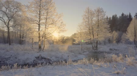 frozen lake : dawn in the winter forest, hoarfrost on the grass