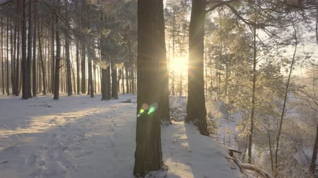deep snow : dawn in the winter forest, hoarfrost on the grass