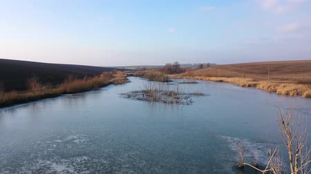 ledový : Trees in the icy water of the river. Bushes grow in the river