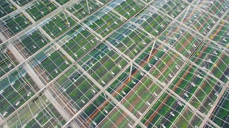 colheita : Flying above greenhouses with vegetables
