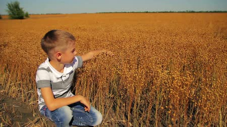 tohum : 8 years old boy sitting near the flax field and moves his hand over  twigs Stok Video