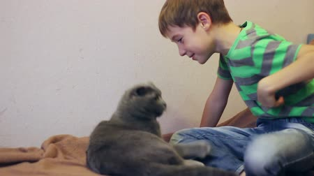 brit : boy playing with a gray British cat