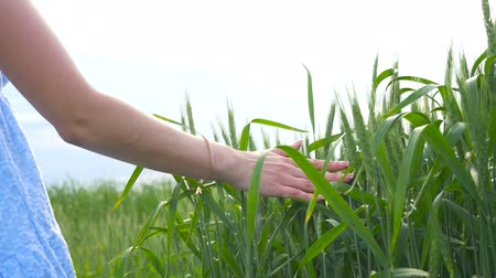 sc : Young beautiful girl walking on a green wheat field, holding her hand over the spikelets against the blue sky