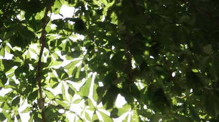 ascetic : rays of the summer sun shining through the green foliage of the trees Stock Footage