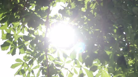 güneş ışını : rays of the summer sun shining through the green foliage of the trees Stok Video