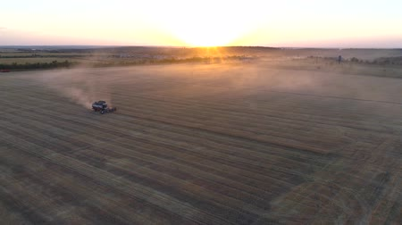 kırsal : Aerial photography with a drone harvester working in a wheat field at sunset Stok Video