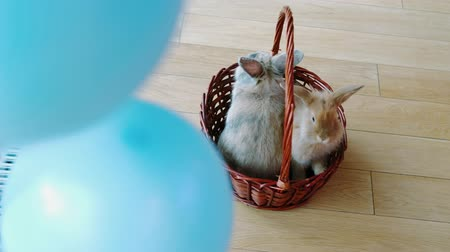 króliczek : Happy Easter, bunny in a basket