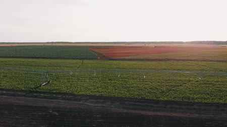 balanced : Industrial farming 4K Aerial video footage: Irrigation of field in Summer. Drone shot, agriculture at dawn in the summer