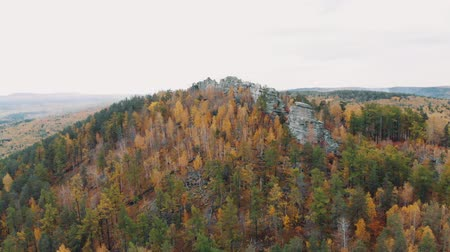 aşağıda : Flight over the rocks in a beautiful colorful autumn forest, among pines and lakes. drone shot Stok Video