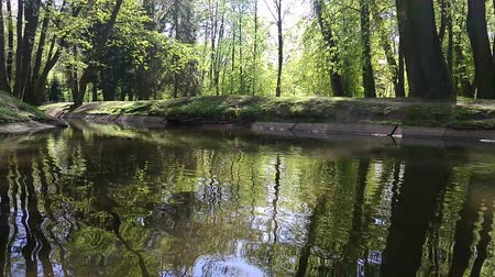 mês : The river in the city Park. Green forest daytime. Reflections of trees on the surface of the water.