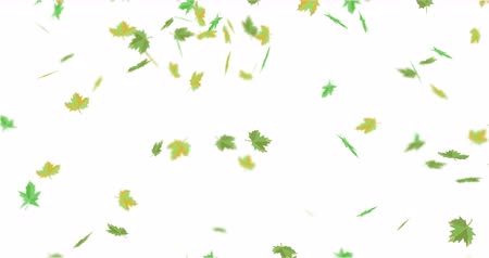 videotape : Green yellow maple leaves. Fall down. Stock Footage